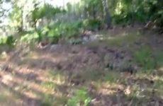 Anaal neuken in het bos